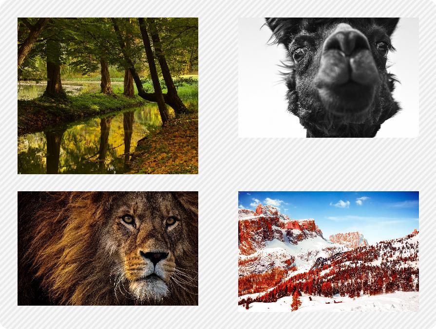 Galerie cu 2 imagini pe fiecare rând